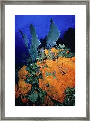 Sea Fan Collage Framed Print