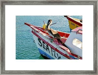Sea Fly 1, Aruba Framed Print