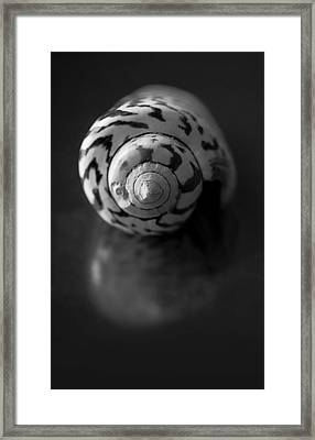 Sea Gem In Black And White Framed Print by Maggie Terlecki