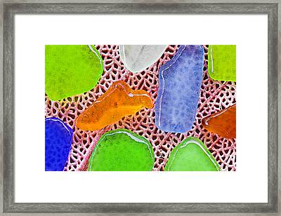 Sea Glass-st Lucia Framed Print by Chester Williams