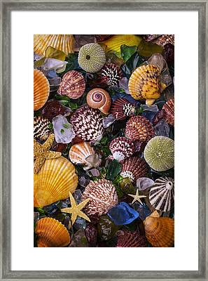 Sea Glass With Sea Shells Framed Print