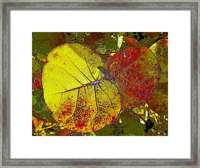 Sea Grape Leafs Framed Print by David Lee Thompson