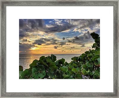 Sea Grape Sunrise Framed Print