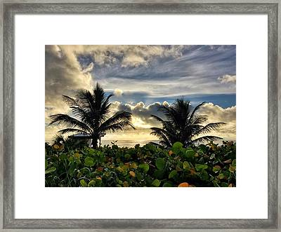 Sea Grapes And More Framed Print