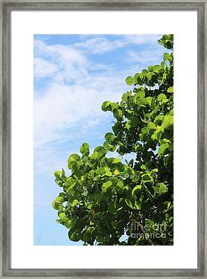 Sea Grapes With Blue Sky Framed Print