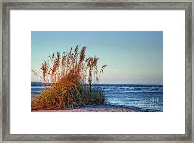 Sea Grass View Framed Print