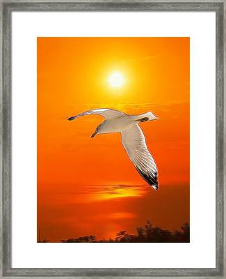 Framed Print featuring the photograph Sea Gull by Athala Carole Bruckner