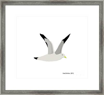 Sea Gull Flying Framed Print by Fred Jinkins