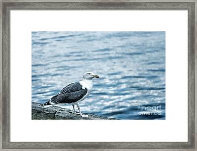 Sea Gull II Framed Print by Tamyra Ayles
