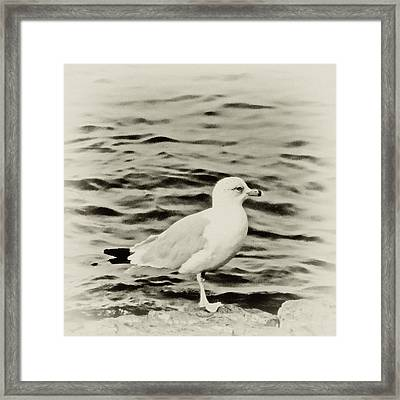 Sea Gull In Sepia Framed Print by Tony Grider