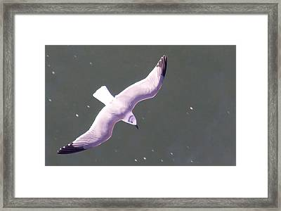 Sea Gull Offshore Framed Print by Bill Perry