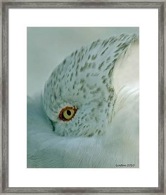 Sea Gull On A Windy Morning Framed Print