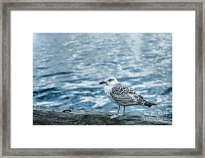Sea Gull Framed Print by Tamyra Ayles