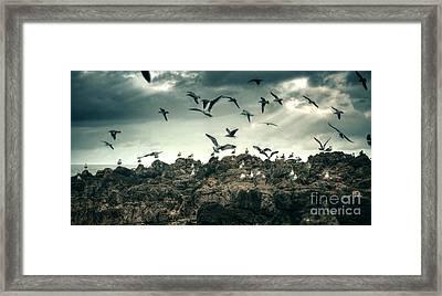 Sea Gulls Framed Print by Carlos Caetano