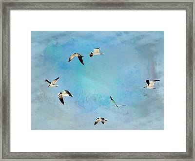 Framed Print featuring the photograph Sea Gulls In Flight by Athala Carole Bruckner