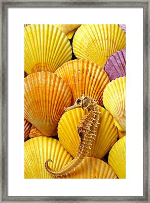 Sea Horse And Sea Shells Framed Print by Garry Gay