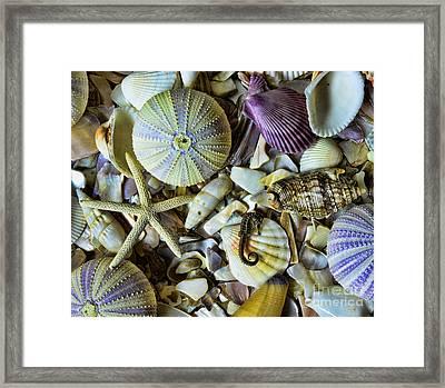 Sea Horse And Sea Star Framed Print