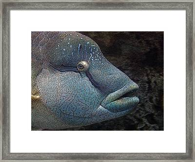 Sea Life 19 Framed Print
