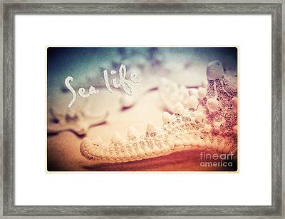 Sea Life Framed Print by Angela Doelling AD DESIGN Photo and PhotoArt