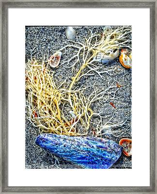 Sea Life Art By Sharon Cummings Framed Print