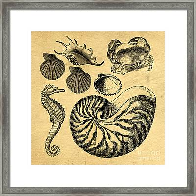 Framed Print featuring the drawing Sea Life Vintage Illustrations by Edward Fielding
