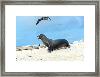 Sea Lion And Birds Framed Print