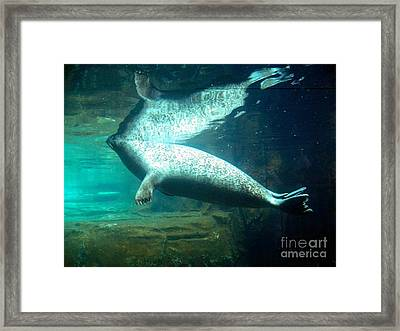 Sea Lion Reflection Framed Print by Emily Kelley