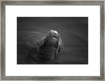 Sea Lion V Bw Framed Print