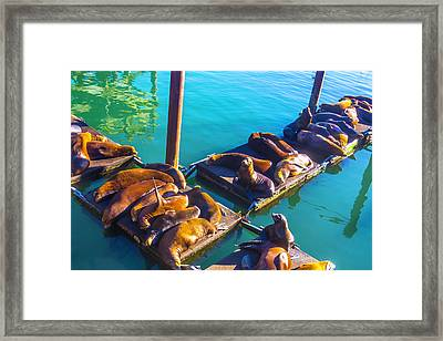Sea Lions On Harbor Docks Framed Print by Garry Gay