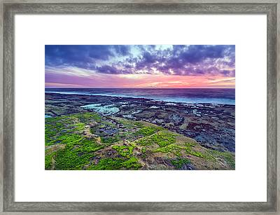 Sea Moss Sunset Framed Print