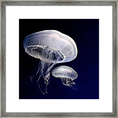 Sea Mushrooms Framed Print by Thanh Thuy Nguyen