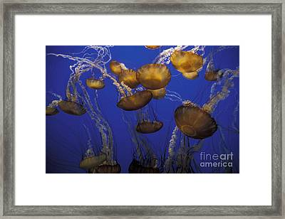Sea Nettels Framed Print by Stan and Anne Foster