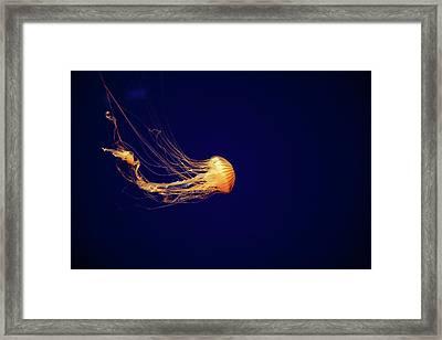 Sea Nettle Dance Framed Print