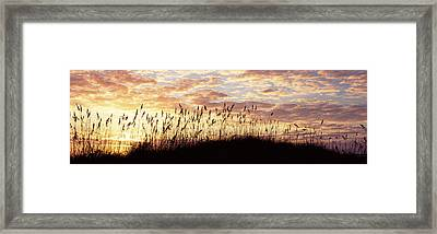 Sea Oat Grass On The Beach, Atlantic Framed Print