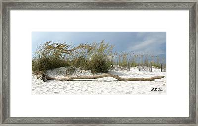 Sea Oats And Driftwood Framed Print by Dennis Stein