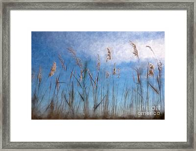 Sea Oats And Sky On Outer Banks Ap Framed Print by Dan Carmichael