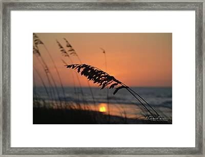 Sea Oats At Sunrise Framed Print by Gordon Mooneyhan