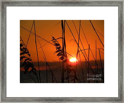 Framed Print featuring the photograph Sea Oats At Sunset by Terri Mills