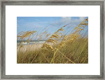 Sea Oats By The Sea Framed Print