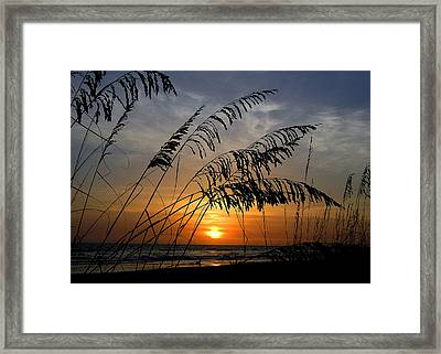 Sea Oats Framed Print by Dan Wells