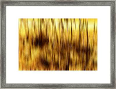 Sea Oats In Motion Framed Print