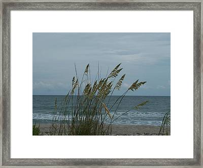 Sea Oats Framed Print