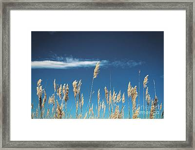 Framed Print featuring the photograph Sea Oats On A Blue Day by Colleen Kammerer