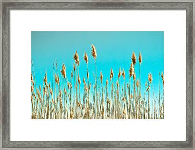 Sea Oats On Turquoise Sky Framed Print by Colleen Kammerer