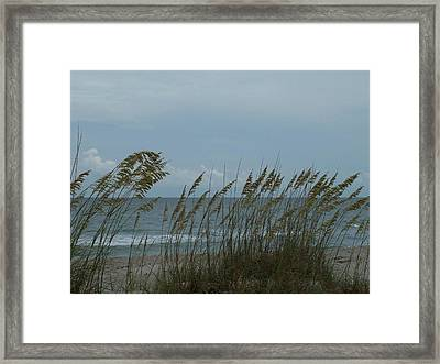 Sea Oats On Wrightsville Beach Framed Print