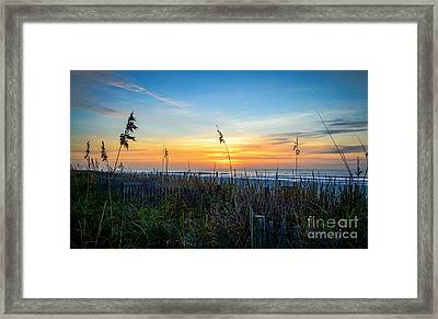 Sea Oats Sunrise Framed Print