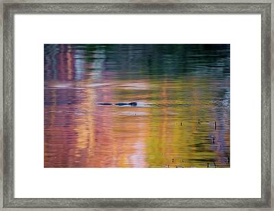 Framed Print featuring the photograph Sea Of Color by Bill Wakeley