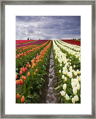 Sea Of Color Framed Print by Mike  Dawson