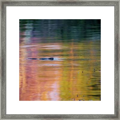 Framed Print featuring the photograph Sea Of Color Square by Bill Wakeley
