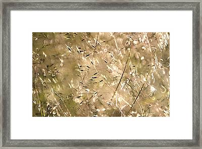 Sea Of Grass Framed Print